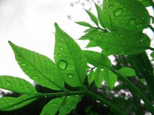 gw_leaves