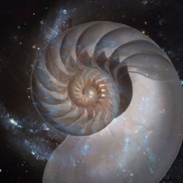 spiral galaxy and spiral nautilus shell