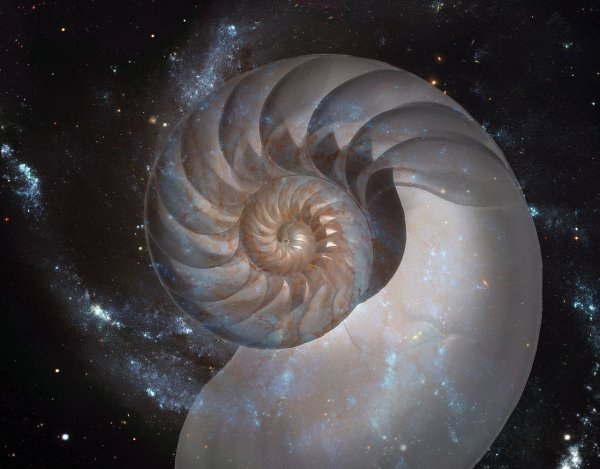 Nautilus shell and M101 spiral galaxy. Creativity, science and Math